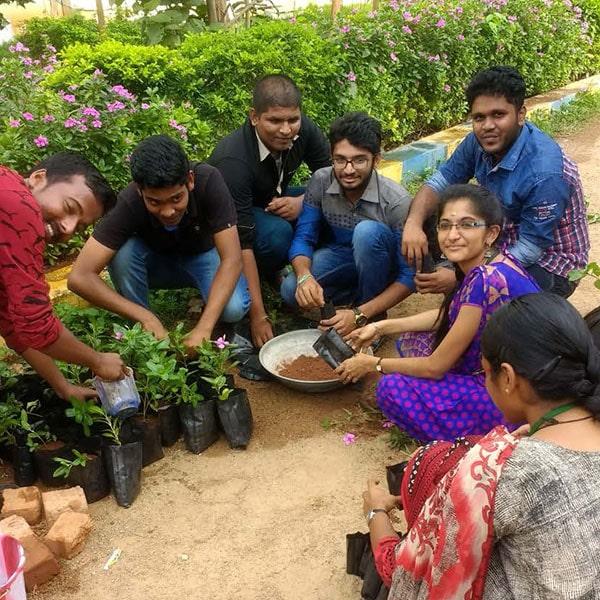 Tree Sapling Preparation
